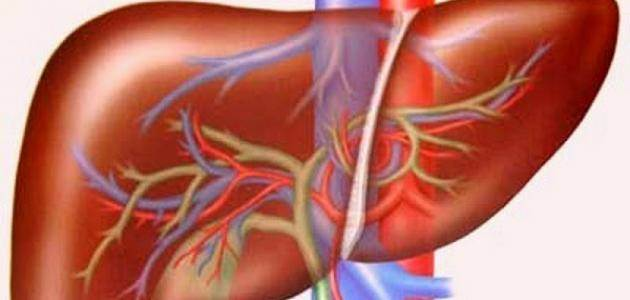 Doctor Live علامات الكبد السليم